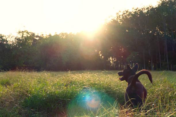 Black dog on a sunny day picture id1040945864?b=1&k=6&m=1040945864&s=612x612&w=0&h=5nptjo vipddqaanl4m03powgqb1rt6jr xlyuizt y=