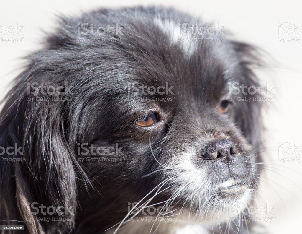 black dog on the nature stock photo