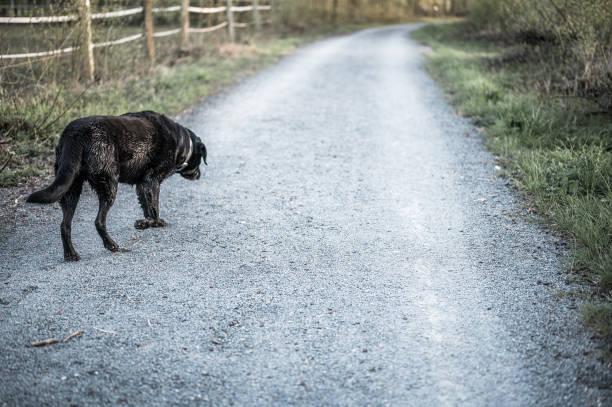 Schwarzer Hund – Foto