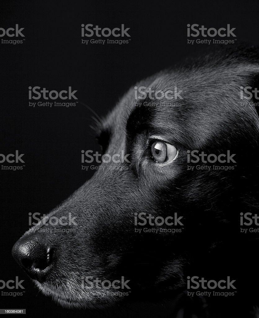 Black dog profile royalty-free stock photo