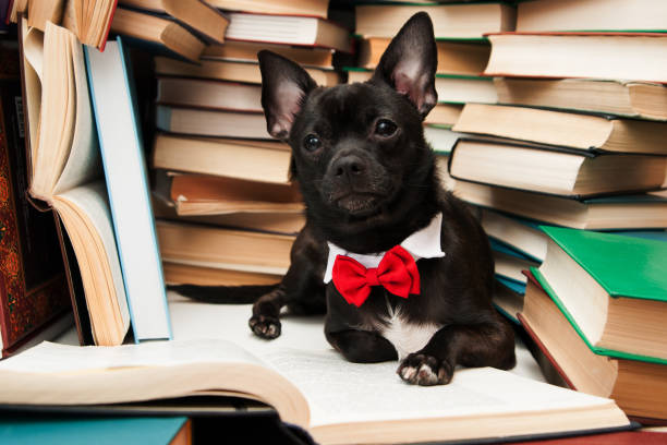schwarzer hund lesebuch - humor bücher stock-fotos und bilder
