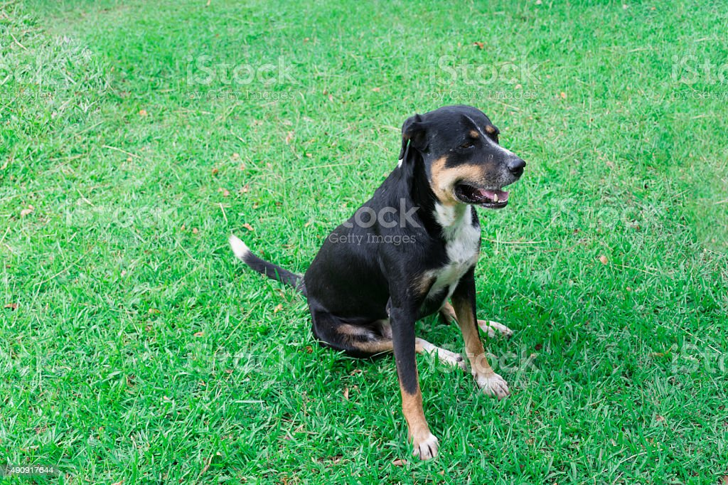 Black dog sit in park and look to right side stock photo