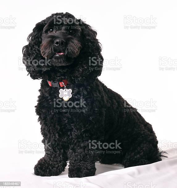 Black dog sitting down picture id183348467?b=1&k=6&m=183348467&s=612x612&h=qqz rax9ubbmh0szfuxqc5hfeayi7q2dk1syo0zvodq=