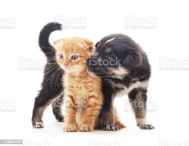 Black dog with a kitten picture id1158644082?b=1&k=6&m=1158644082&s=612x612&h=syseixeqwol6xv5f bojvyfbmuzzxue03ghkxottij4=