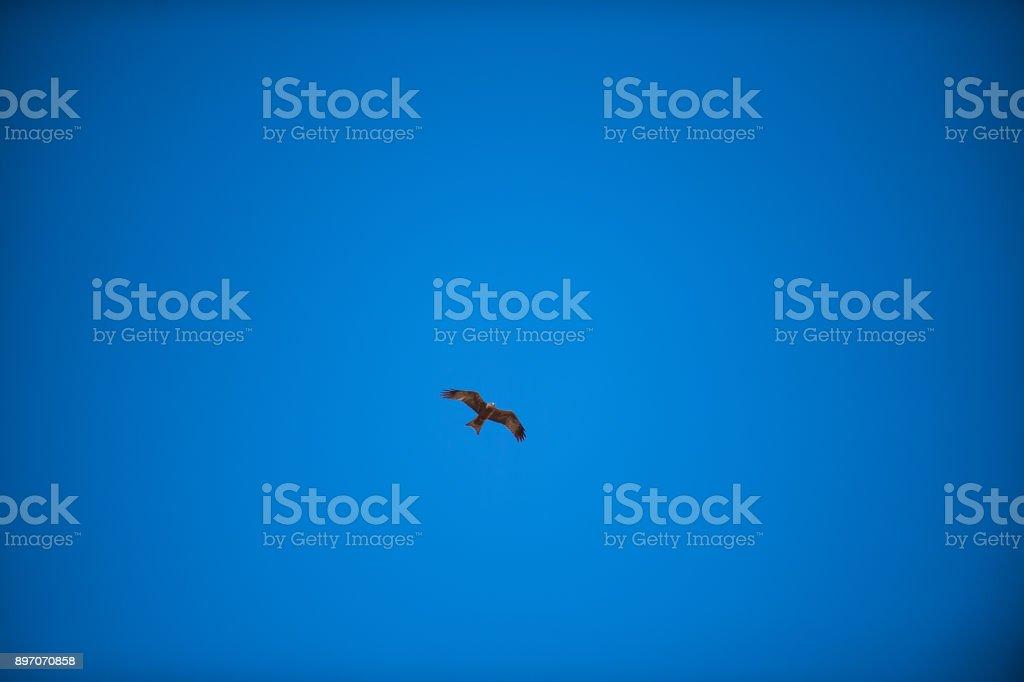 Preto águia azul céu - foto de acervo