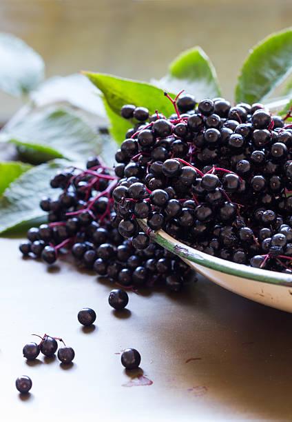 black elderberries, sambucus nigra in emaille bowl. vertikale, textfreiraum - roter holunder stock-fotos und bilder