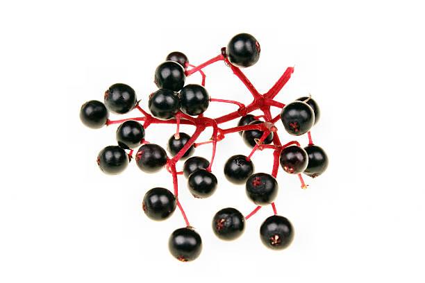 black holunderbeere - roter holunder stock-fotos und bilder