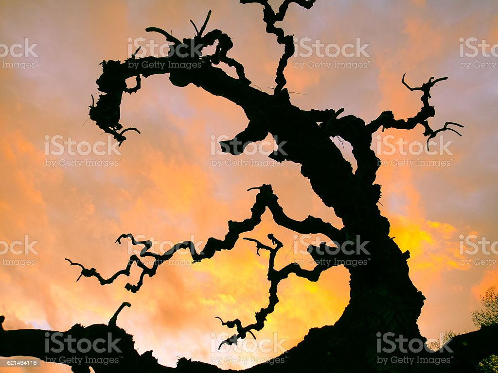 Black fairy tree at yellow-red sunset. Background and texture photo libre de droits