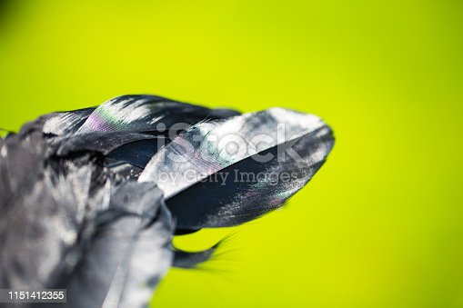 istock black feather from an angel's wing, 1151412355