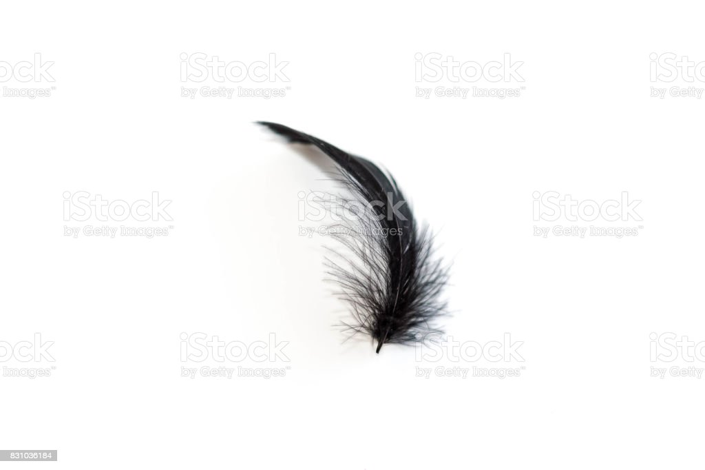 Black feather on the white background.Clipping path inside. stock photo