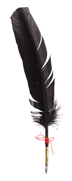black feather quill pen - quill stock photos and pictures