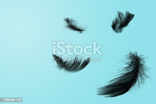 Black feathers floating in the sky blue sunlight green pastel