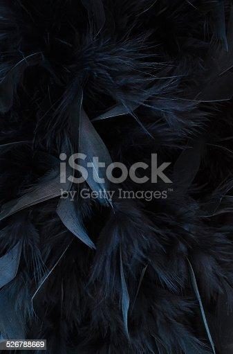 istock black feathers 526788669