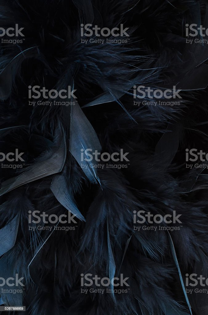 black feathers stock photo