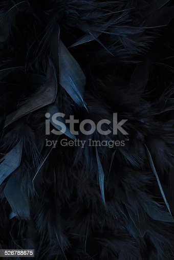 istock black feathers 526788675