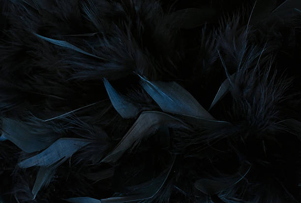 black feathers - gothic style stock pictures, royalty-free photos & images