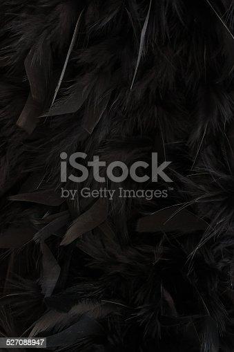 istock black feathers 527088947
