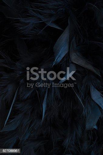 istock black feathers 527088951