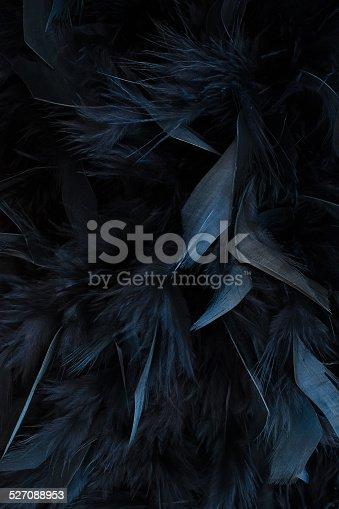 istock black feathers 527088953