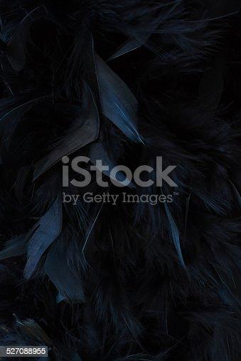 istock black feathers 527088955