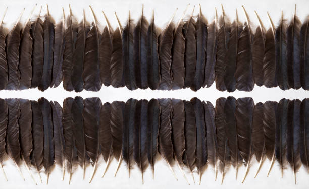 black feathers - hair line surface stock photos and pictures