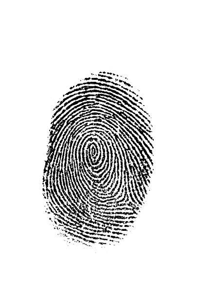 black fingerprint on white - fingerprint stock photos and pictures