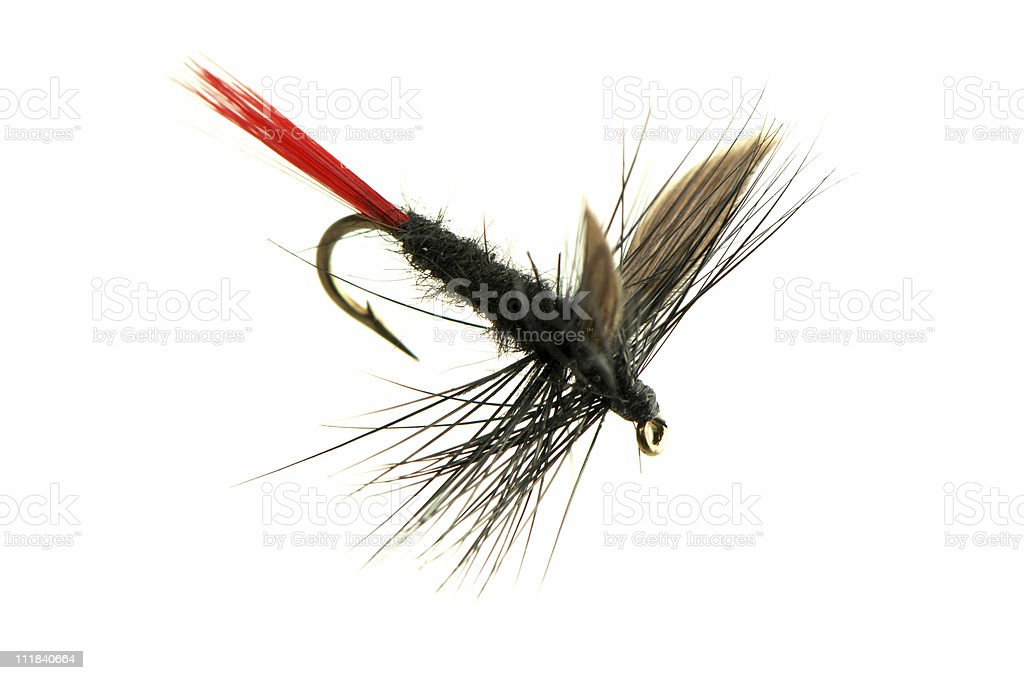 Black Fly Fishing with Red Tail Isolated on White Background royalty-free stock photo