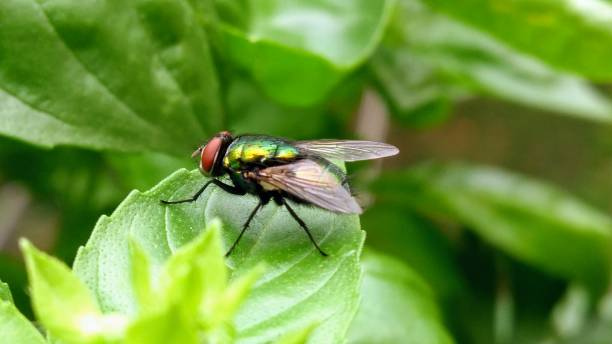 Black Fly on Flowers stock photo