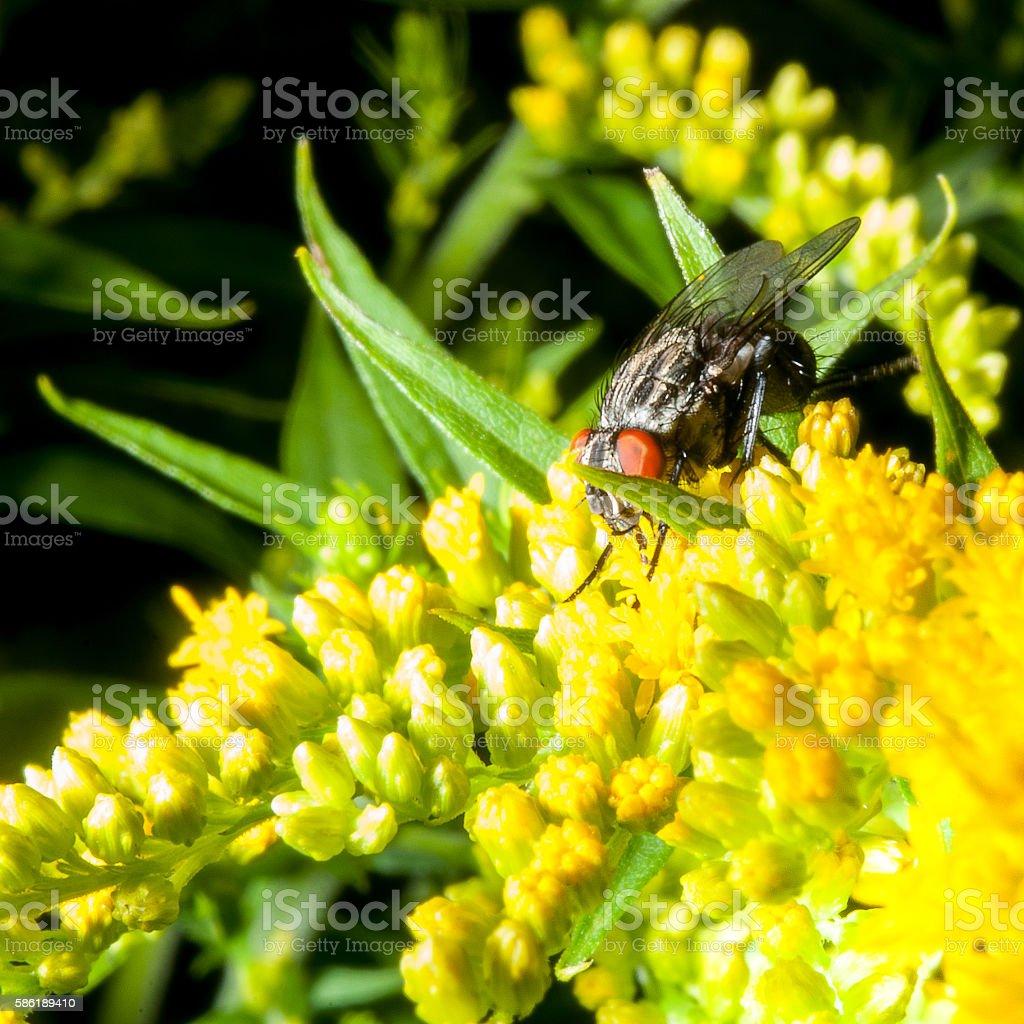 Black fly stock photo