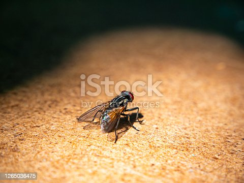 A black fly sits on a wooden table. Macro photo. Insect fly. Insect paws. Background image. Place for text. Shadow.