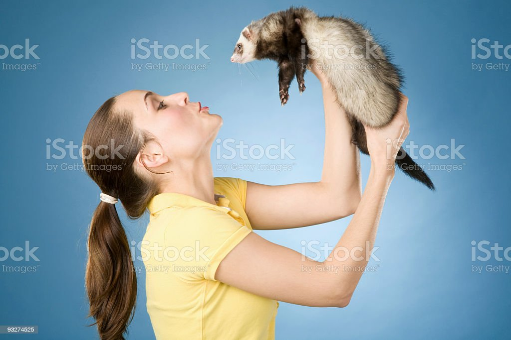 Black Footed Ferret stock photo
