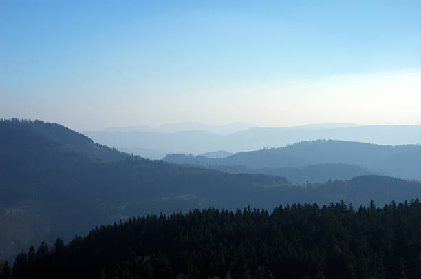 Black Forest in Blue stock photo