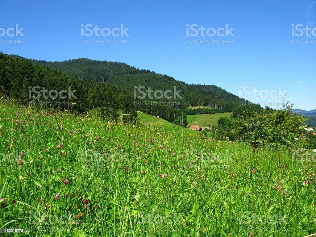 Black Forest in Germany royalty-free stock photo