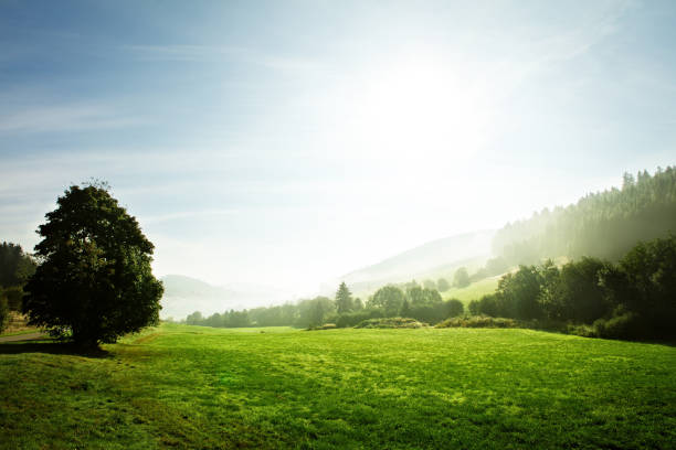 black forest landscape at the dawn, germany, copyspace - meadow stock pictures, royalty-free photos & images