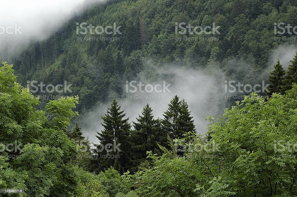 Black Forest landscape stock photo
