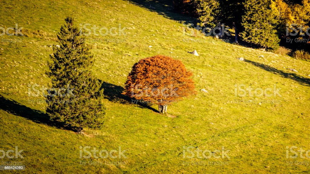 Black forest meadow stock photo
