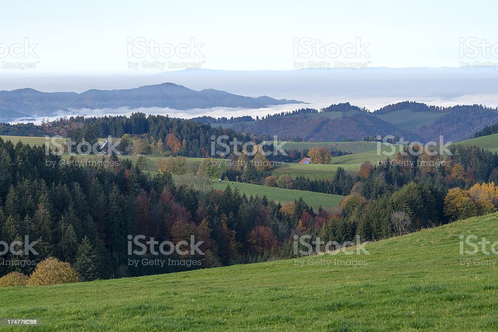 black forest morning royalty-free stock photo