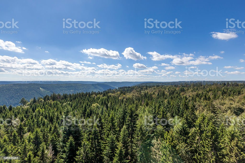 black forest national park royalty-free stock photo