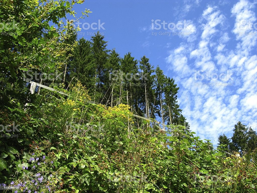 Black Forest royalty-free stock photo