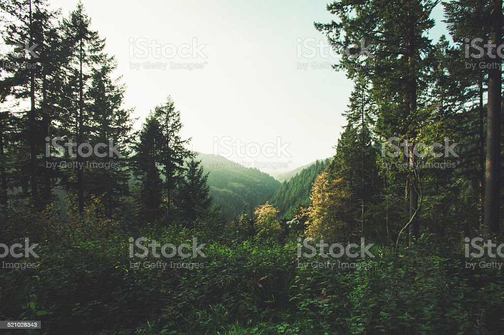 Schwarzwald stock photo