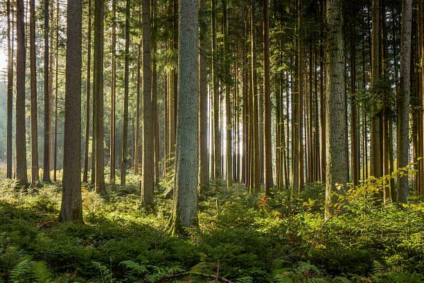 Schwarzwald – Foto