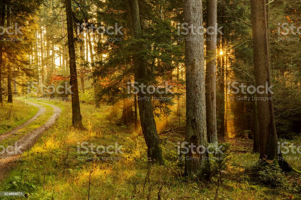 Black Forest stock photo