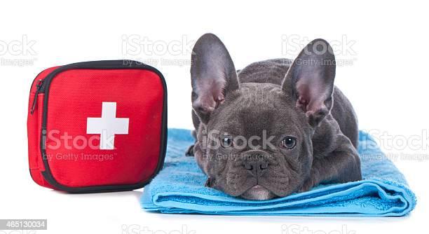 Black french bulldog laying down with first aid kit picture id465130034?b=1&k=6&m=465130034&s=612x612&h=v2thvs ixqnryex2a5cbdoxubb76bnc7i9yvogovdwm=