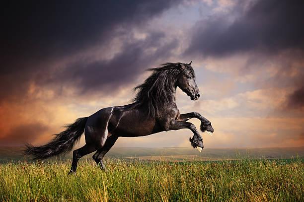 Black friesian horse gallop picture id179054685?b=1&k=6&m=179054685&s=612x612&w=0&h=9asrclhasqjzkzafucmnnvu0kudnj69cxbd  pvnibk=