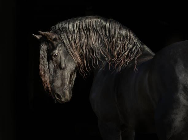 Black friesian horse picture id1213315250?b=1&k=6&m=1213315250&s=612x612&w=0&h=3jjplutk4lttw0mjvdtogrbkz3 qc9bocsufznbd4g0=