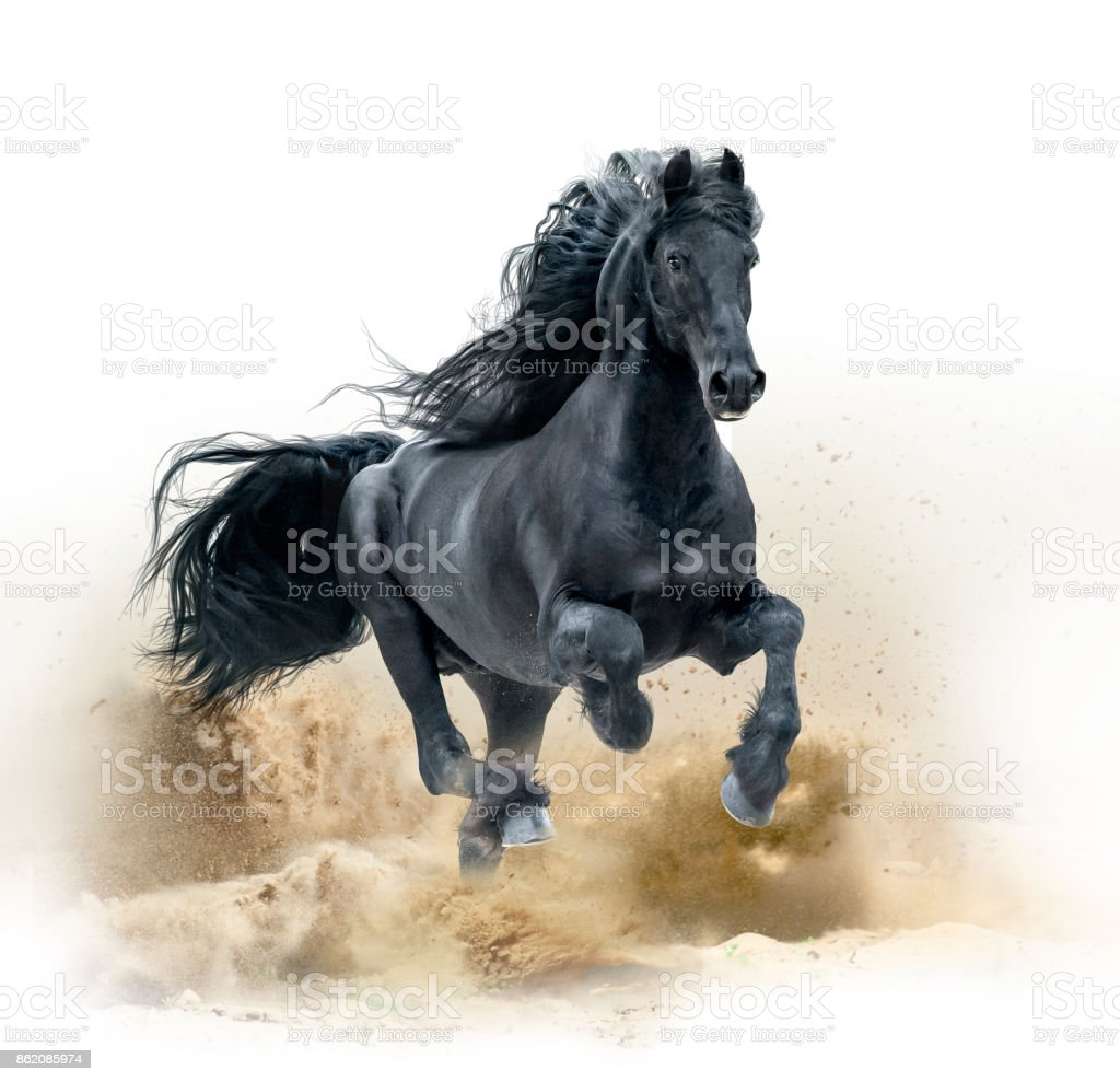 Black Friesian Horse Running In Desert Stock Photo Download Image Now Istock