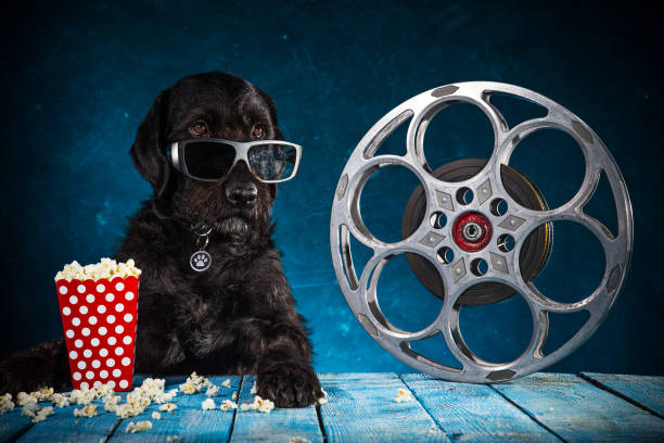Black funny dog withRetro film production accessories stock photo