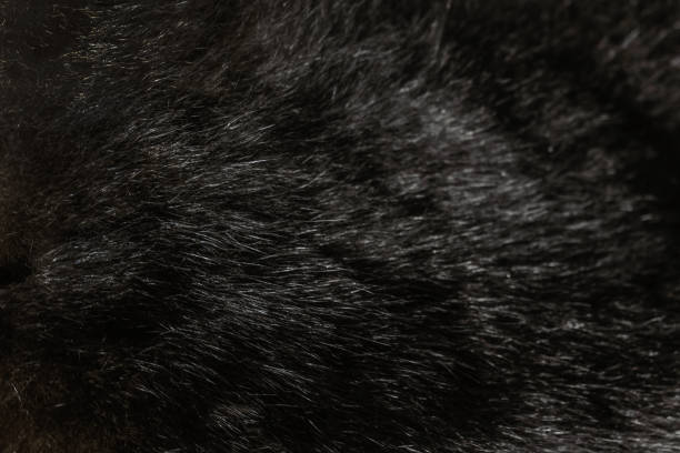 Black fur textured background Black fur textured background cowhide stock pictures, royalty-free photos & images