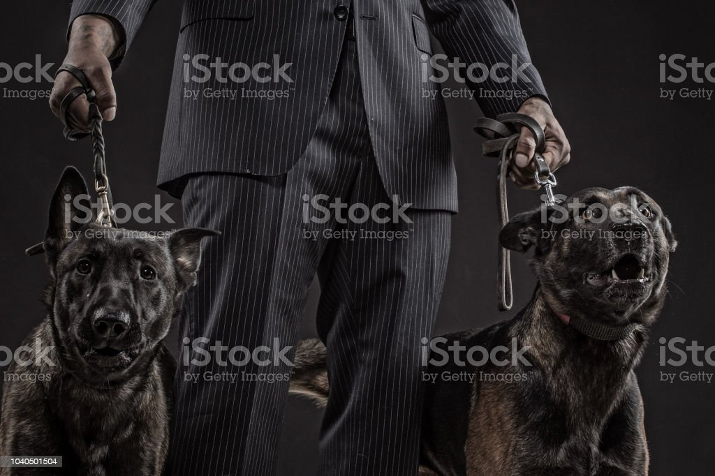 Black Gangster Mafia Man with security guard dogs in smoky studio...
