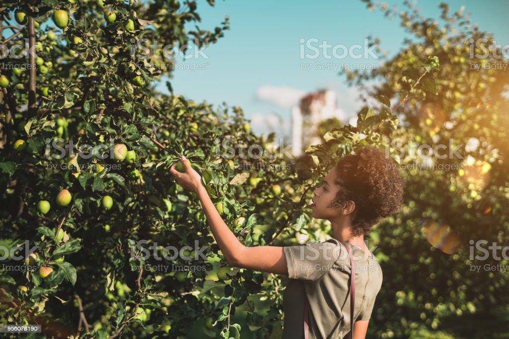 Schwarzes Mädchen ist Abholung Apfel vom Baum im park – Foto